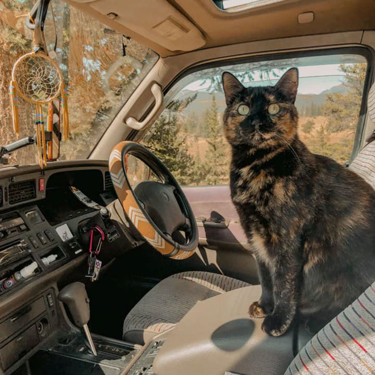 van life with a cat