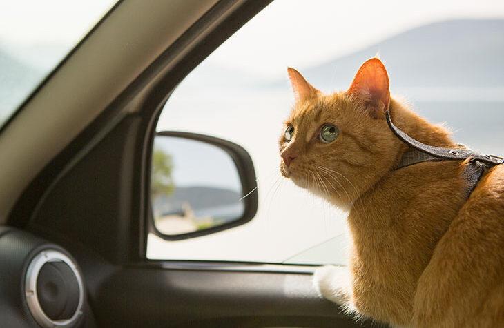van life with a cat