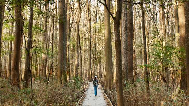 is congaree national park worth visiting