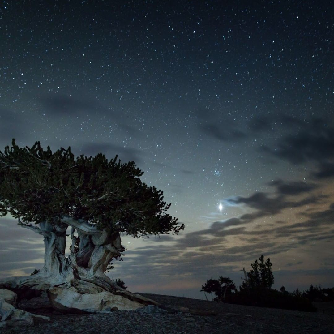 bristlecone mt washington great basin
