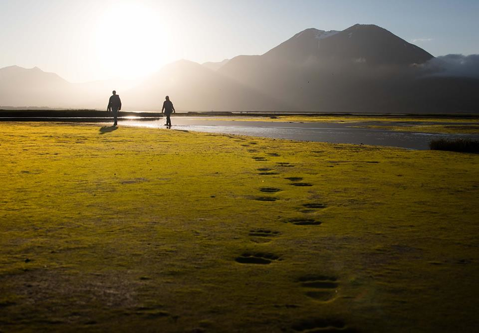 Green algae on the expansive tidal flats of the Katmai